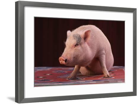 Sitting Pot-Bellied Pig-DLILLC-Framed Art Print