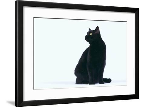 Black Cat-DLILLC-Framed Art Print