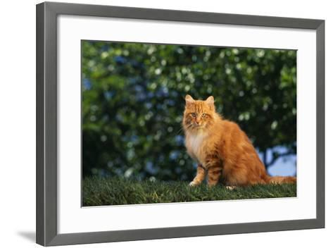 Yellow Cat on Grass-DLILLC-Framed Art Print
