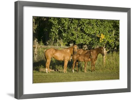 Three Quarter Horses Together in the Pasture-DLILLC-Framed Art Print