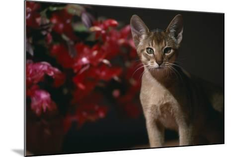Abyssinian Ruddy Cat next to Plant-DLILLC-Mounted Photographic Print