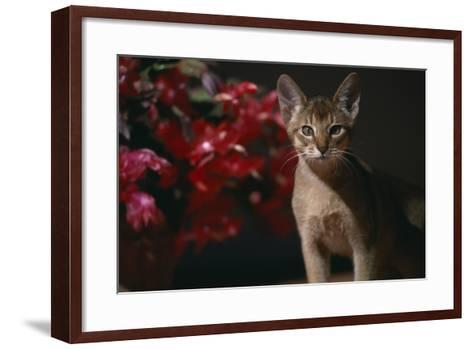 Abyssinian Ruddy Cat next to Plant-DLILLC-Framed Art Print
