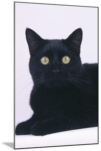 Black Cat-DLILLC-Mounted Photographic Print
