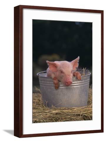 Piglet in a Pail-DLILLC-Framed Art Print