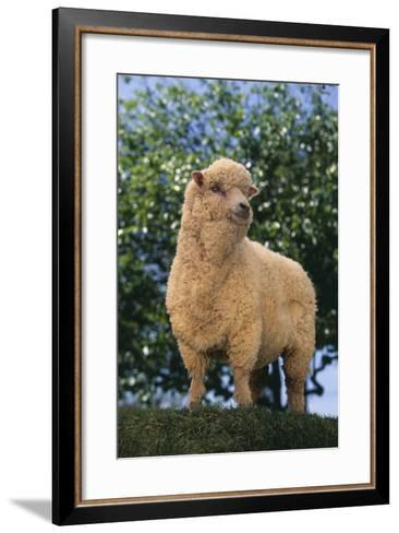 Sheep in Grass-DLILLC-Framed Art Print