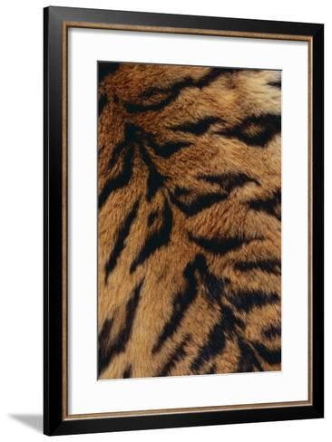 Tiger Fur-DLILLC-Framed Art Print