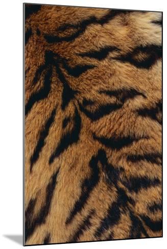 Tiger Fur-DLILLC-Mounted Photographic Print