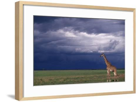 Masai Giraffe in Savanna-DLILLC-Framed Art Print
