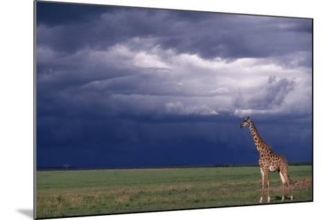 Masai Giraffe in Savanna-DLILLC-Mounted Photographic Print