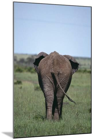 Elephant-DLILLC-Mounted Photographic Print