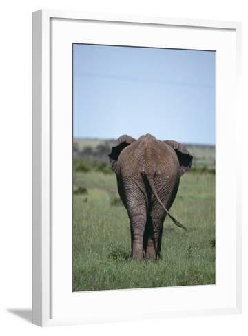 Elephant-DLILLC-Framed Art Print