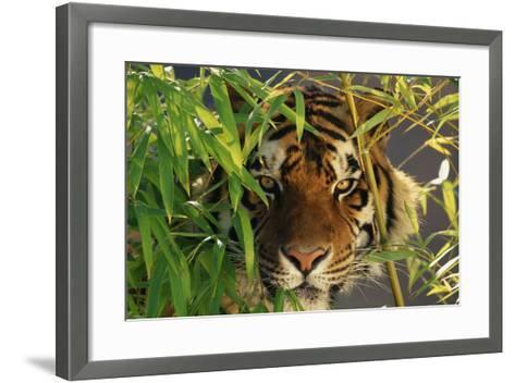 Tiger Sitting among Bamboo Leaves-DLILLC-Framed Art Print
