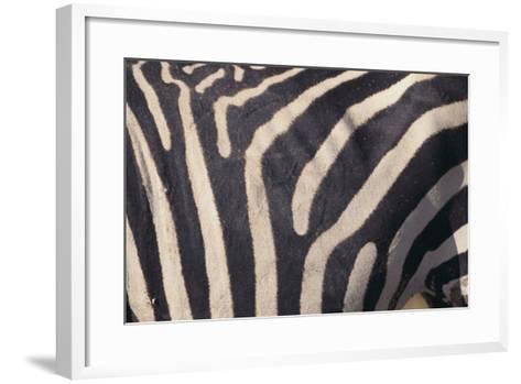 Zebra Flank-DLILLC-Framed Art Print