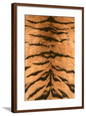 Tiger Fur-DLILLC-Framed Art Print