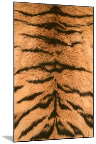 Tiger Fur-DLILLC-Mounted Photographic Print
