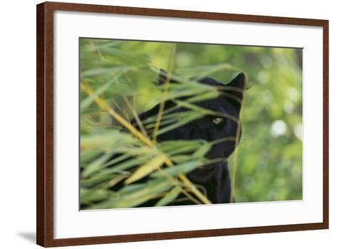 Black Leopard behind Leaves-DLILLC-Framed Art Print