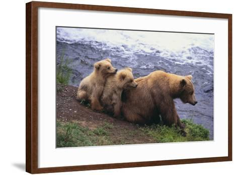 Brown Bear and Cubs-DLILLC-Framed Art Print