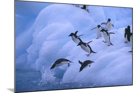 Adelie Penguins Jumping into Water-DLILLC-Mounted Photographic Print