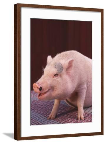 Pot-Bellied Pig-DLILLC-Framed Art Print