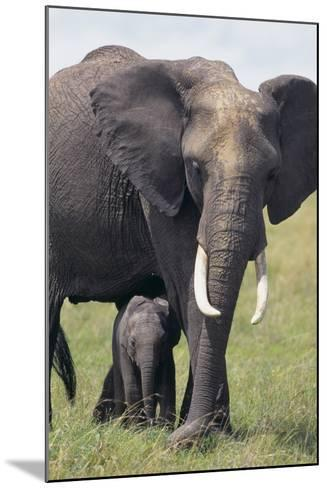 Bull Elephant and Baby-DLILLC-Mounted Photographic Print