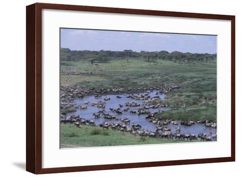 Zebras and Wildebeest at Water Hole-DLILLC-Framed Art Print