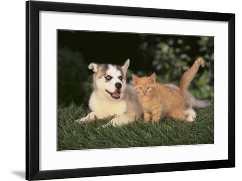 Siberian Husky Puppy and Kitten-DLILLC-Framed Art Print