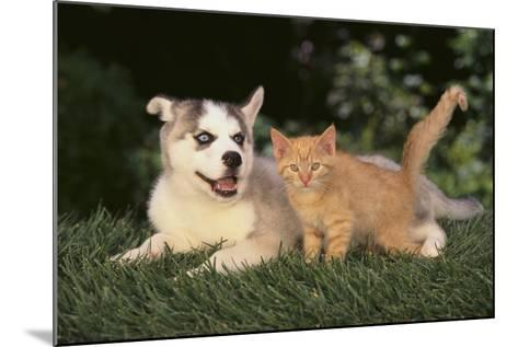 Siberian Husky Puppy and Kitten-DLILLC-Mounted Photographic Print