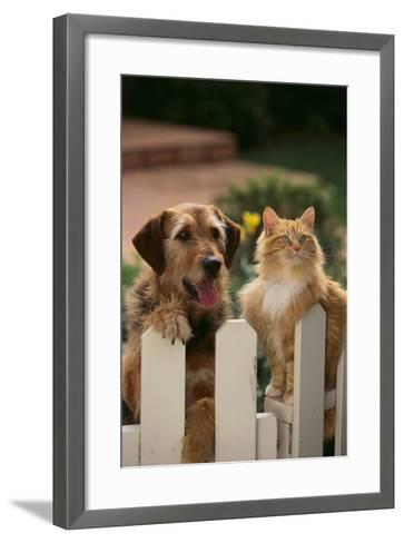 Dog and Cat Waiting beside the Fence-DLILLC-Framed Art Print