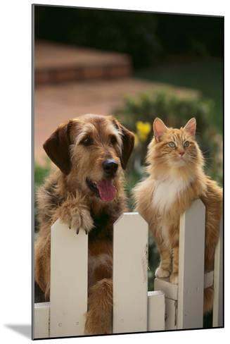 Dog and Cat Waiting beside the Fence-DLILLC-Mounted Photographic Print