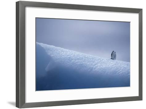 Chinstrap Penguins Standing on Ice-DLILLC-Framed Art Print