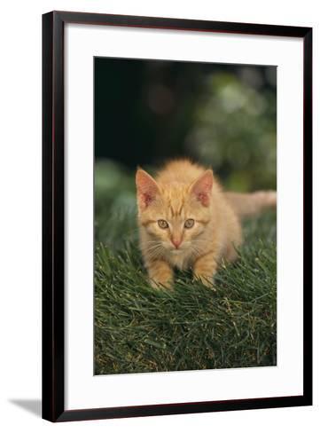 Kitten Crouching in Grass-DLILLC-Framed Art Print