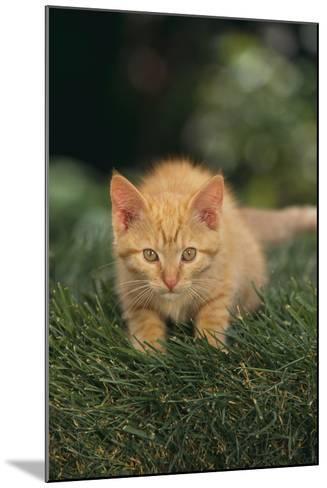 Kitten Crouching in Grass-DLILLC-Mounted Photographic Print