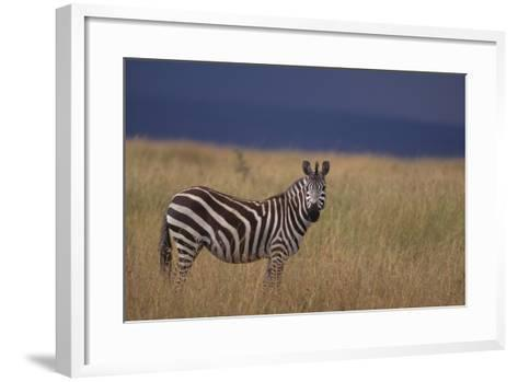 Common Zebra-DLILLC-Framed Art Print