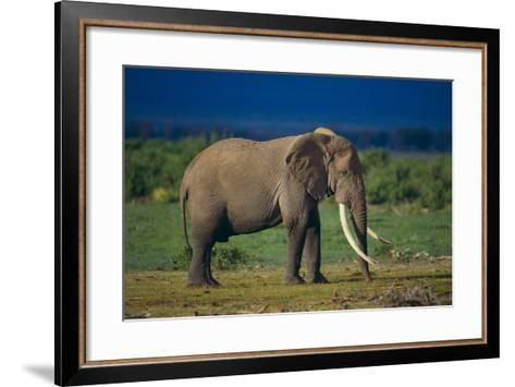 African Elephant on Savanna-DLILLC-Framed Art Print