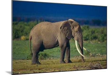 African Elephant on Savanna-DLILLC-Mounted Photographic Print
