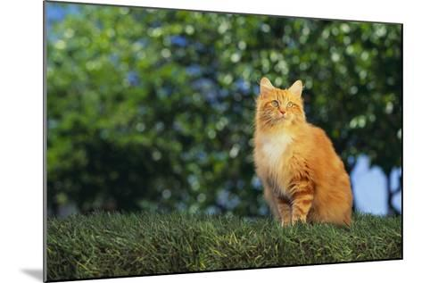 Orange Cat Sitting in Grass-DLILLC-Mounted Photographic Print