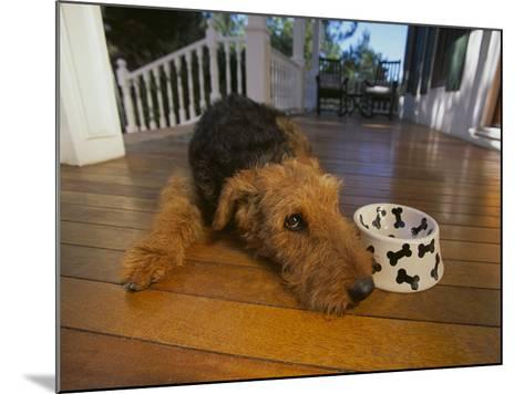 Airedale Terrier-DLILLC-Mounted Photographic Print