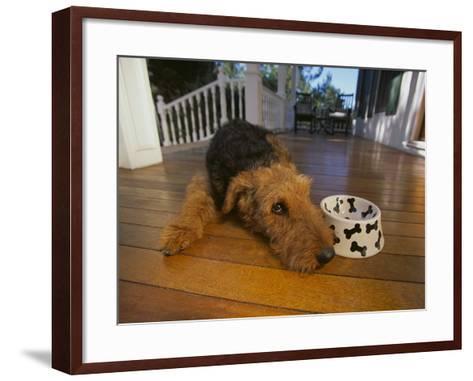 Airedale Terrier-DLILLC-Framed Art Print