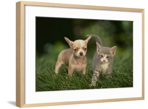 Chihuahua Puppy and Kitten-DLILLC-Framed Art Print