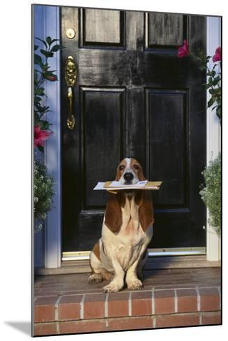Basset Hound Waiting with the Mail-DLILLC-Mounted Photographic Print