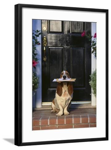 Basset Hound Waiting with the Mail-DLILLC-Framed Art Print