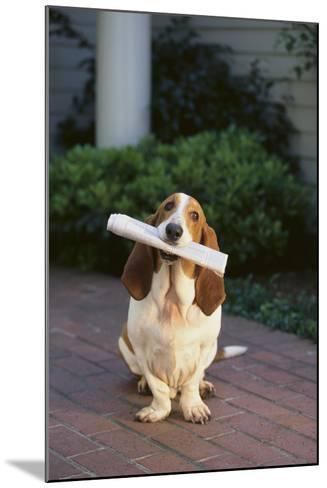 Basset Hound Fetching Newspaper-DLILLC-Mounted Photographic Print