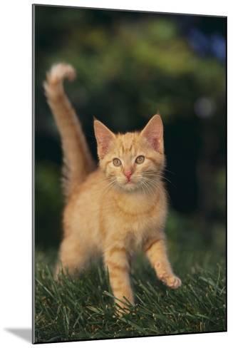 Playful Kitten-DLILLC-Mounted Photographic Print