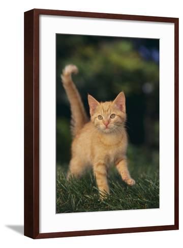 Playful Kitten-DLILLC-Framed Art Print