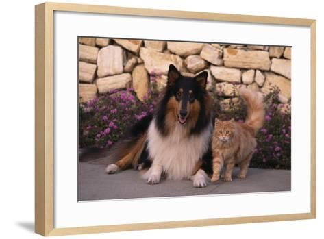 Collie and Yellow Cat on Sidewalk-DLILLC-Framed Art Print
