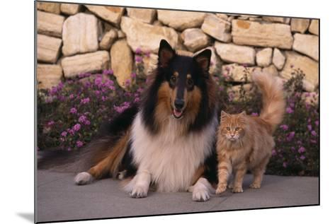 Collie and Yellow Cat on Sidewalk-DLILLC-Mounted Photographic Print