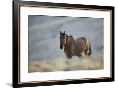 Gaunt Wild Horse on the Range-DLILLC-Framed Art Print