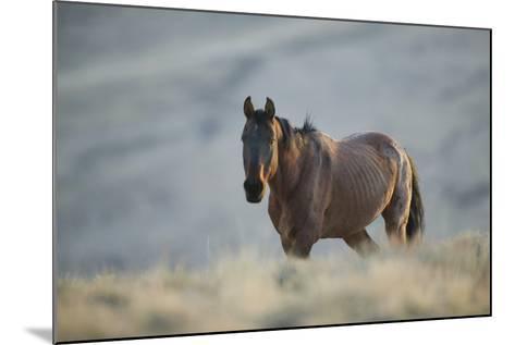 Gaunt Wild Horse on the Range-DLILLC-Mounted Photographic Print