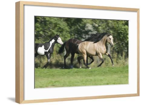 Quarter Horses Running-DLILLC-Framed Art Print