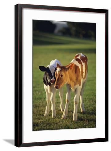 Holstein-Jersey Mix Calf and Holstein Calf-DLILLC-Framed Art Print